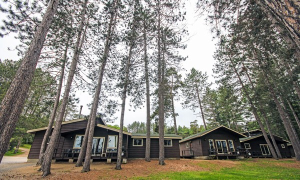 Brown cabins surrounded by spruce trees